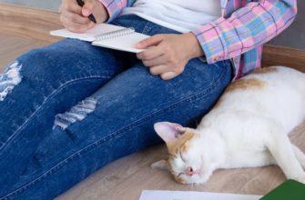 Женщина фрилансер пишет обзор продукта в гостиной с котом