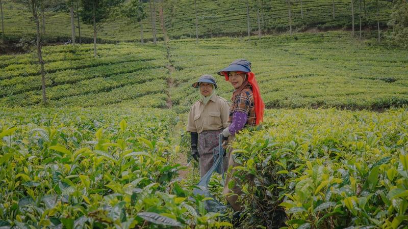 Две китайские женщины фермеры с радостной улыбкой