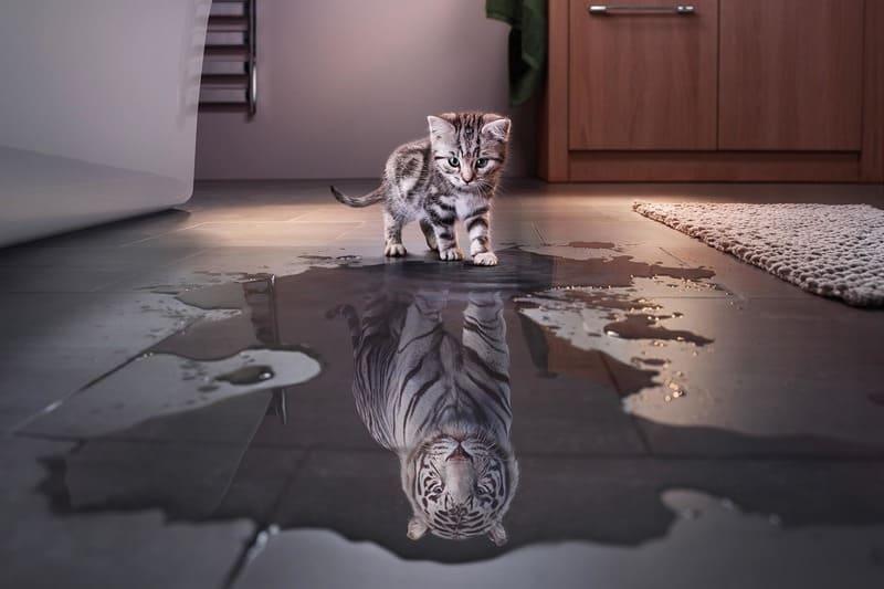Кот смотрит в воду и видит в отражении тигра
