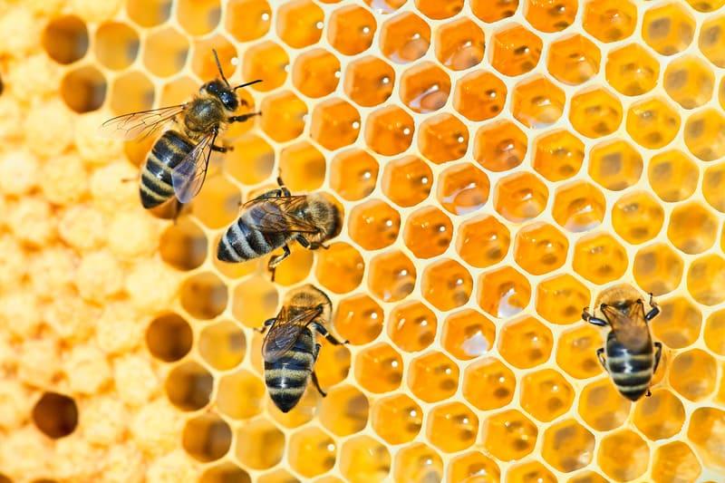 Макро-фотография пчелиного улья на сотах с пчелами