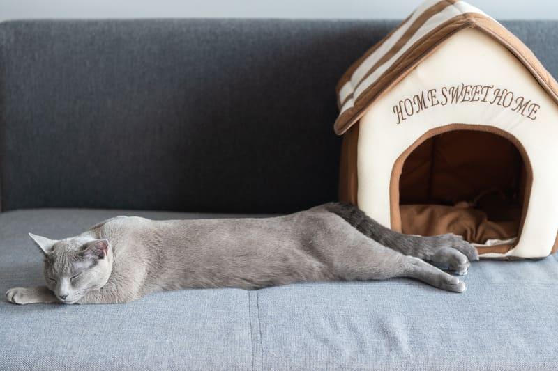 Прекрасный котенок спит на кровати